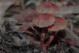 Pixel Pitch Calculator